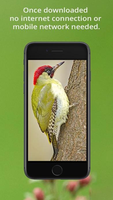 Bird Song Id UK