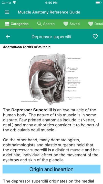 Muscle Anatomy Reference Guide screenshot-3