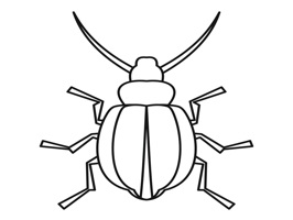 InsectsTL