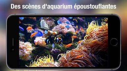 Screenshot #2 pour Aquarium Live HD +
