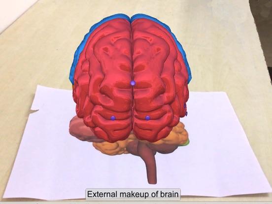 AR Human brain screenshot 11