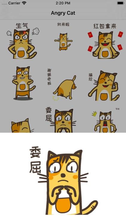 AngryCat2