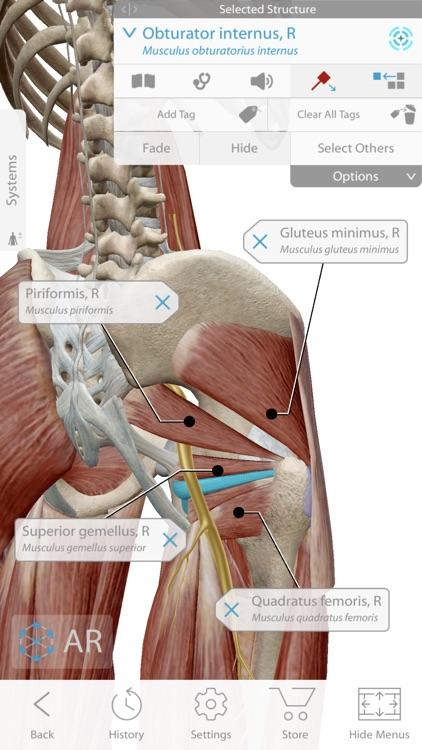 Human Anatomy Atlas 2020