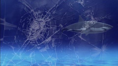 Shark Attack Video Wallpaper App Price Drops