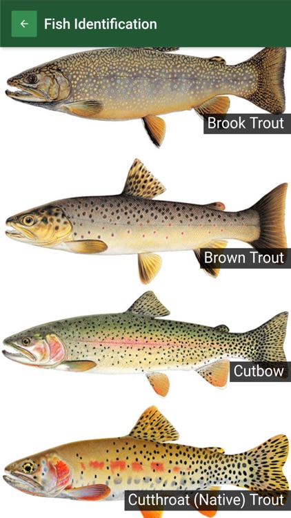 CPW Fishing screenshot-3