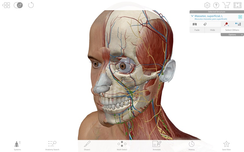 Human Anatomy Atlas 2019 screenshot 1