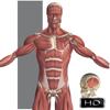 Visual Anatomy - Education Mobile