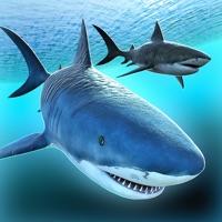 Codes for Sea Shark Adventure Hack