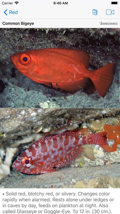 Scuba Fish Hawaii screenshot-8