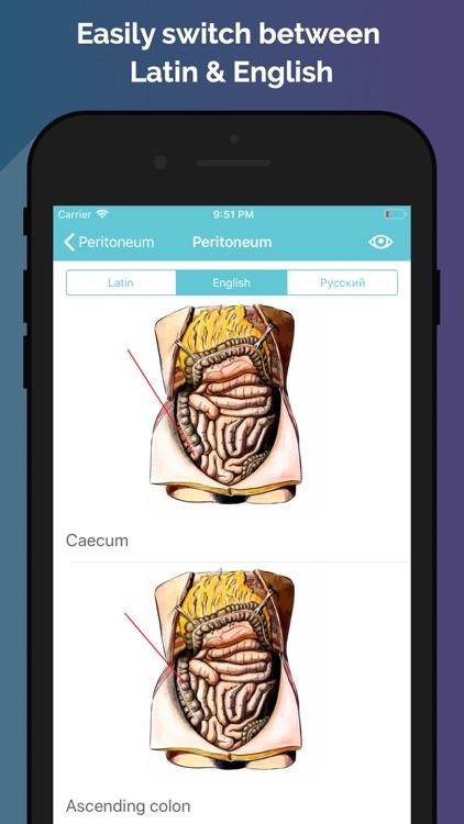 Easy Anatomy - Atlas & Quizzes screenshot-3