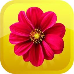 Emojis-flowers