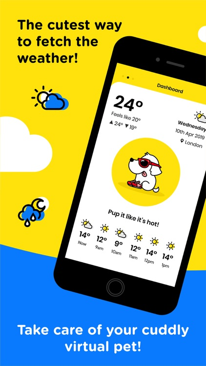 Cats & Dogs Weather