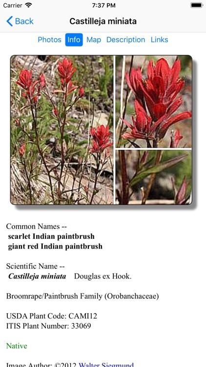North California Wildflowers screenshot-5