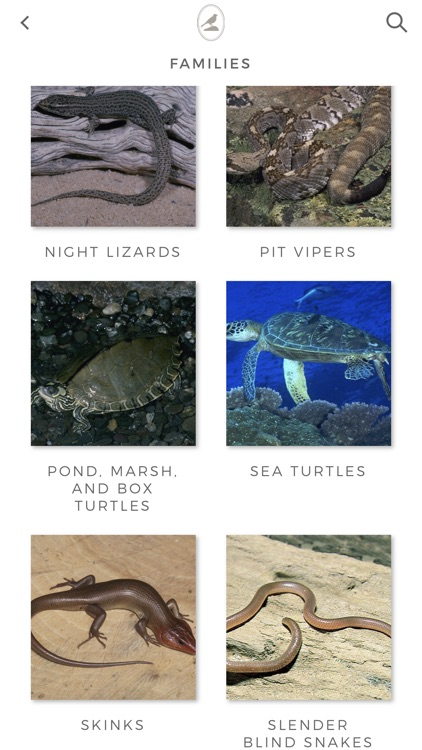 Fieldstone Guide: Reptiles