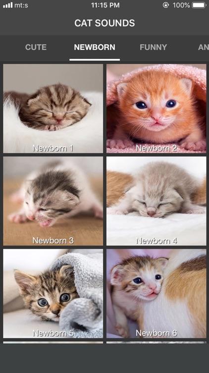 Cat Sounds - Meow Soundboard screenshot-3