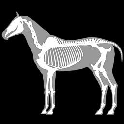3D Horse Anatomy Software