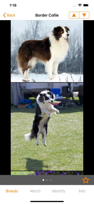 Perfect Dog X - All The Breeds