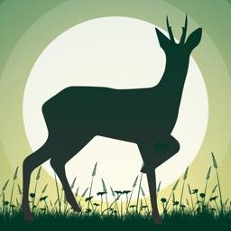 Roe Deer Calls