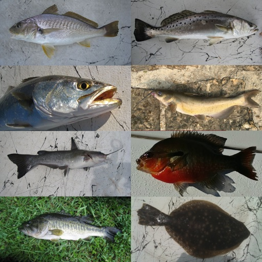 Fisherman's Fish ID