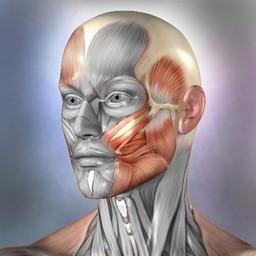 Muscle & Bone Anatomy 3D