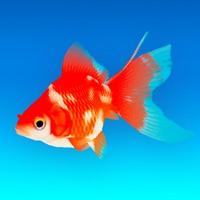 Goldfish - Aquarium Fish Tank free Resources hack