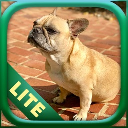 Dogs Lite - Photo Breeds Quiz