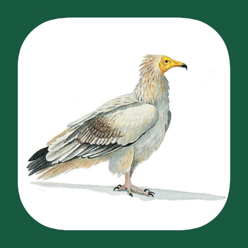 North Africa Birds
