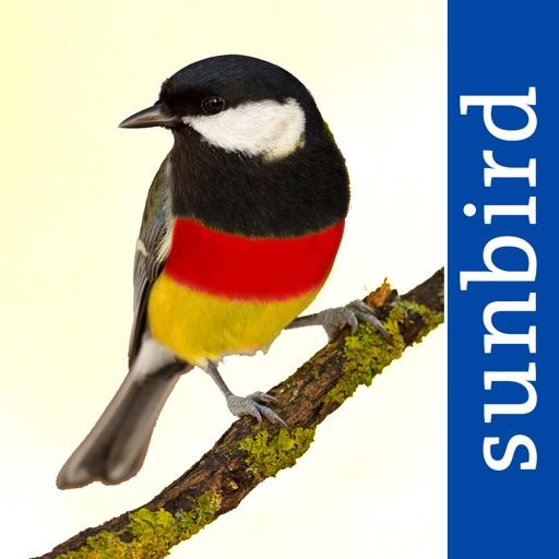 All Birds Germany