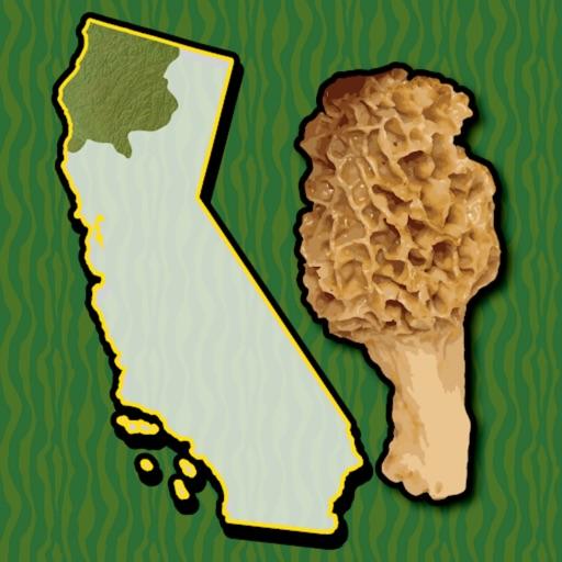 California NW Mushroom Forager