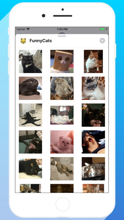Talkitty - Cats Stickers screenshot-3