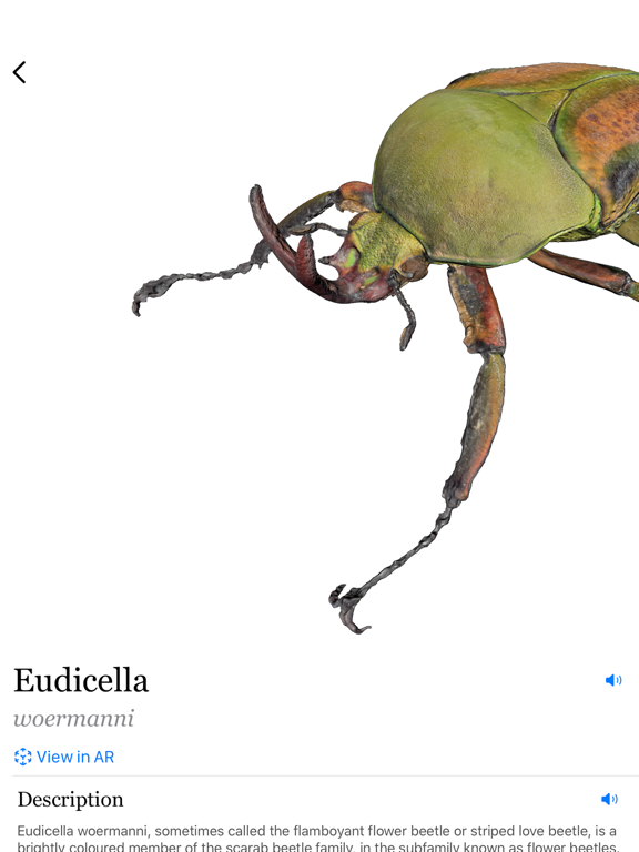 Insecta: Screenshots