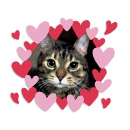 My Favourite Kitties