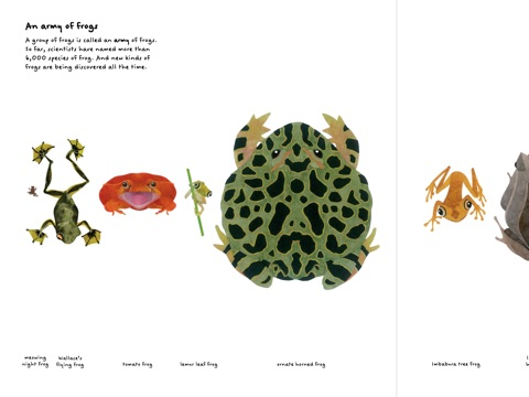 Image result for frog book steve jenkins