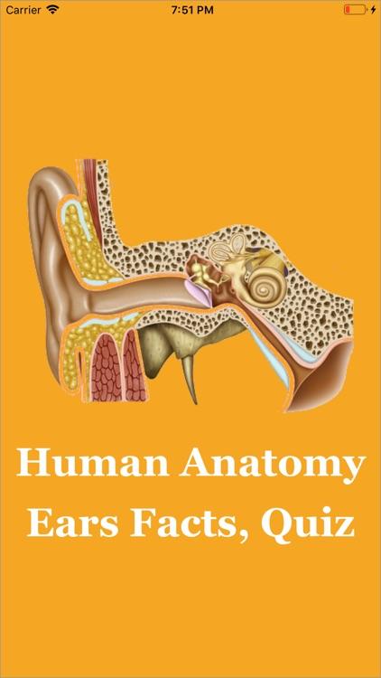 Human Anatomy Ears Facts, Quiz