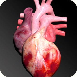 Muscular System 3D (anatomy) on the App Store