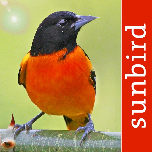 Bird Id USA - backyard birds