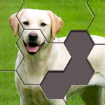 Hexa Jigsaw Puzzle ® Hack Online Generator  img