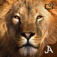Codes for Safari: Evolution Hack