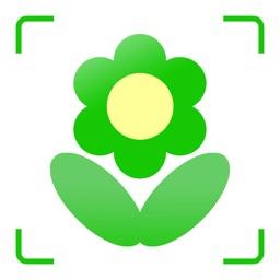 花草日记植物识别 多肉绿植的花花世界