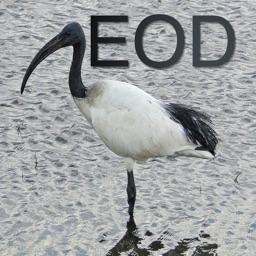 EodTrader