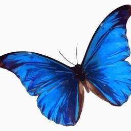 Butterflies. The stickers