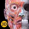 解剖学 - 三维图谱
