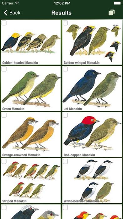 All Birds Ecuador field guide