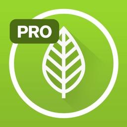 Garden Plate Pro
