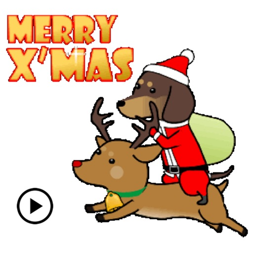 Funny Dog On Christmas Holiday