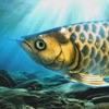 稚魚から育てるアロワナ - iPadアプリ