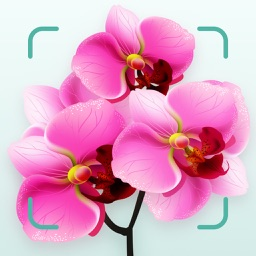 Flower plant ident and care