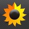 Sunfollower