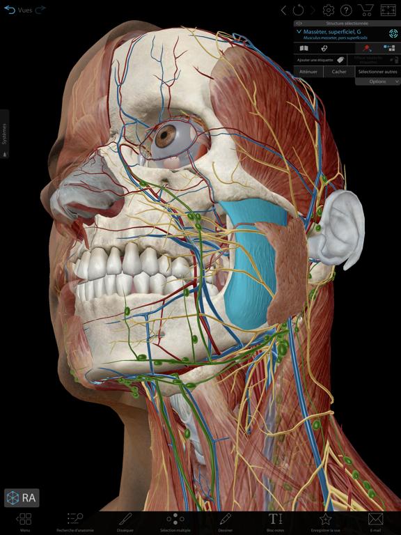 Screenshot #4 pour Atlas d'anatomie humaine 2021