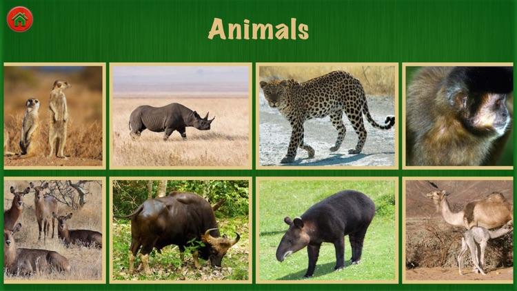 Animal World Pro For Fun